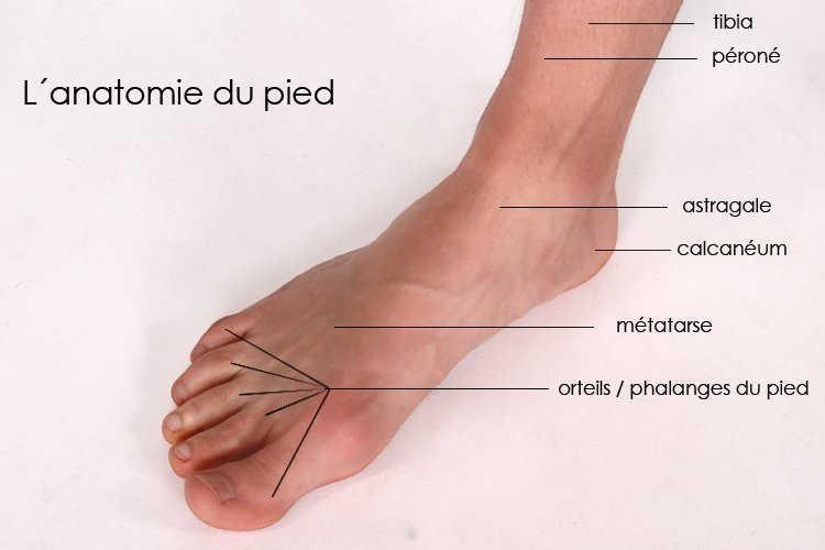 douleur cou du pied